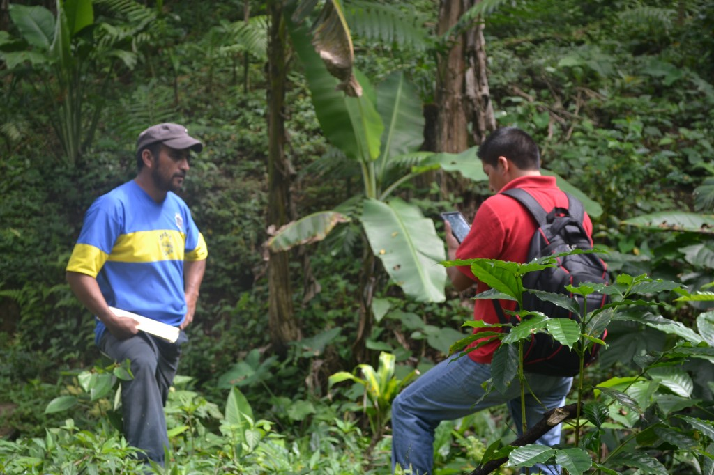 Rainforest Alliance and iFormBuilder